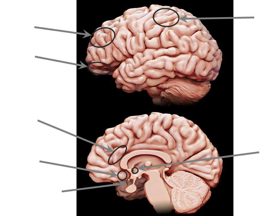 Hirnforschung, Biologie, Neurobiologie und Psychobiologie des Glück